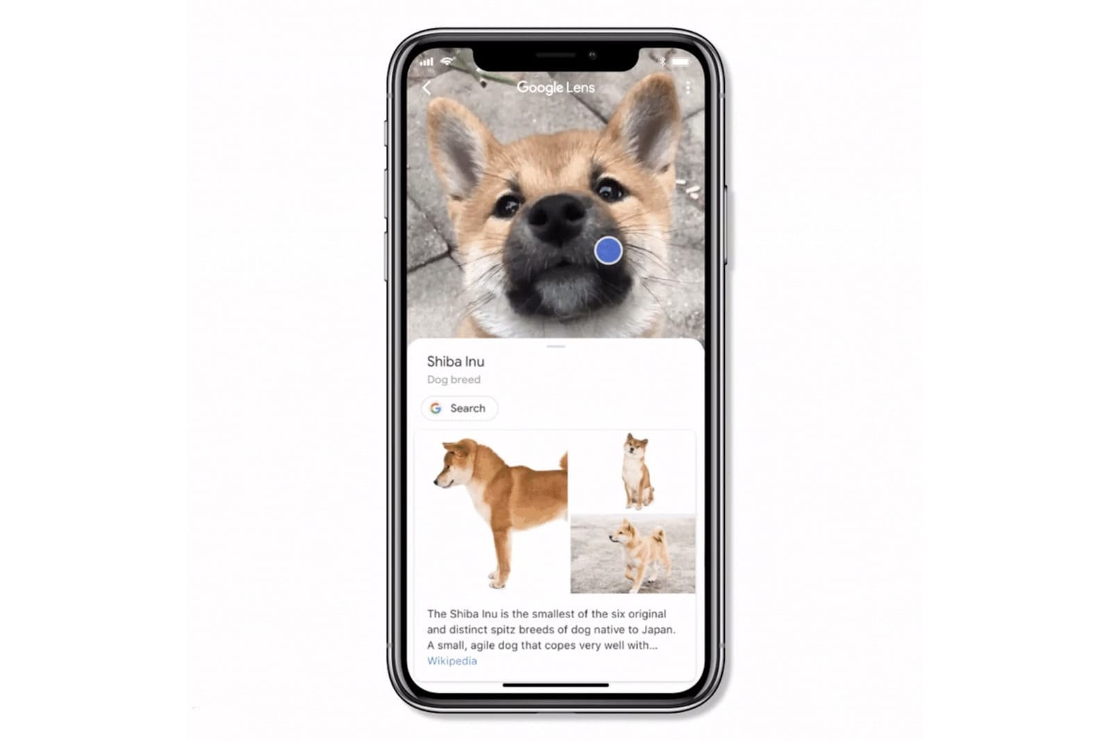 Google Lens for iOS